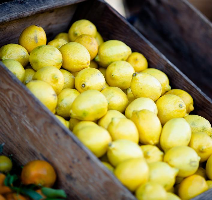Zitronen - Mallorca Detox Retreat Basenfasten Entschlacken